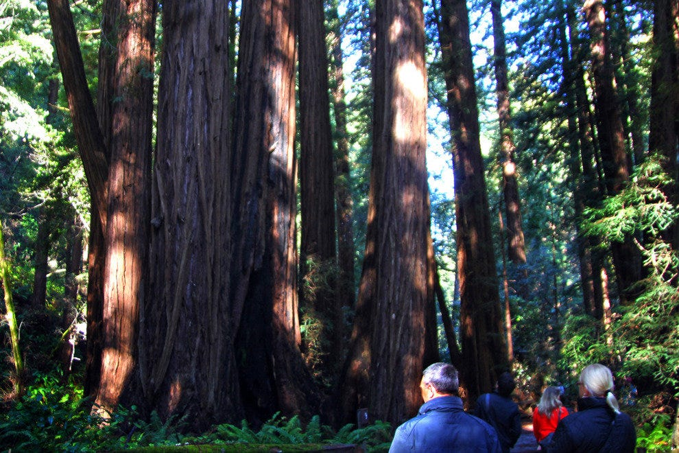 Visitors From Around the World Marvel at the Giant Redwoods