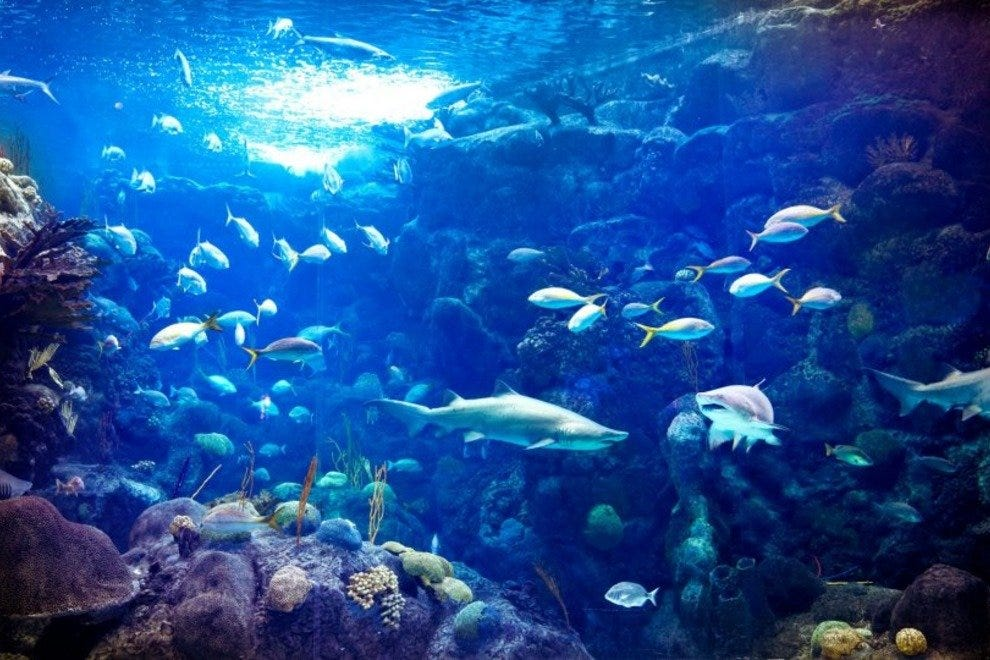 Glimpse the mysterious underwater world at the Florida Aquarium