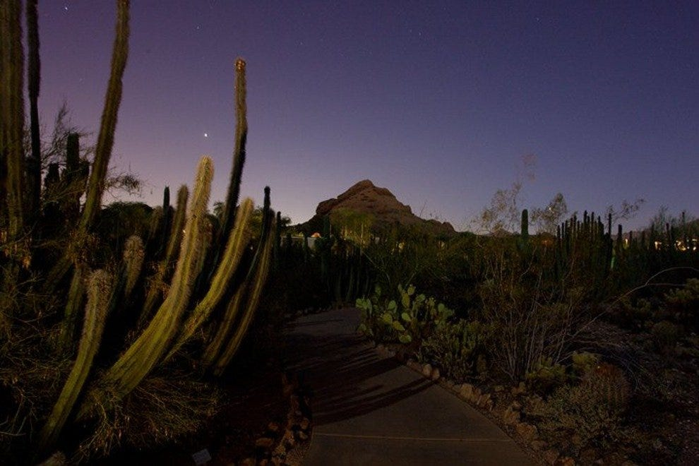 Explore the desert at night with a flashlight tour at the Desert Botanical Garden