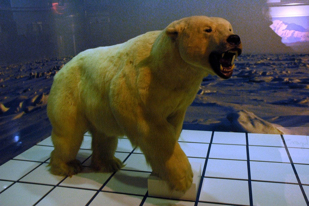 Stuffed polar bears fill adorn this Anchorage airport