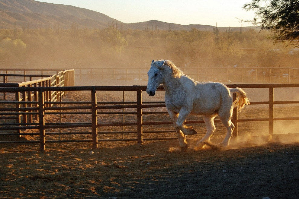 Take the Family to a Tucson Dude Ranch