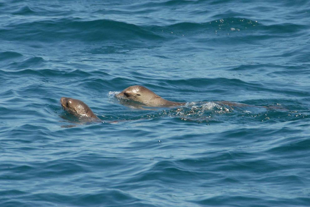 San Diego Seals Harbor Tour San Diego Attractions Review 10best Experts And Tourist Reviews