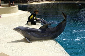 Secret Garden and Dolphin Habitat