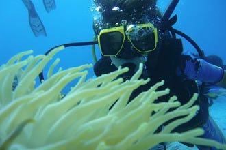 新秀和大师在阿鲁巴的潜水和浮潜冒险
