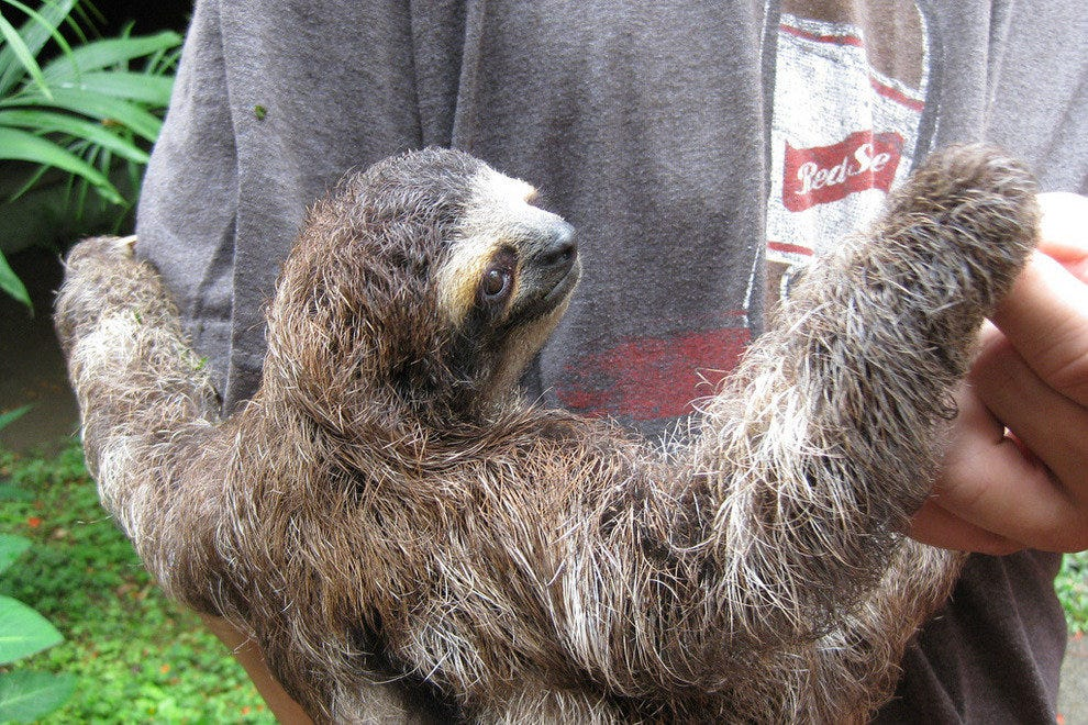 A friendly sloth