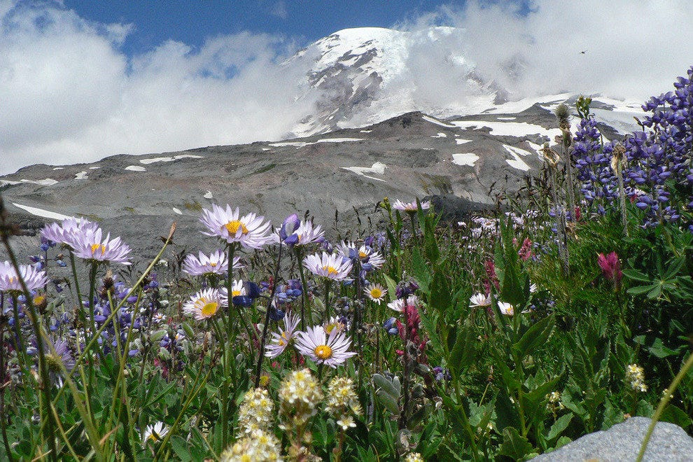 Mount Rainier wildflowers