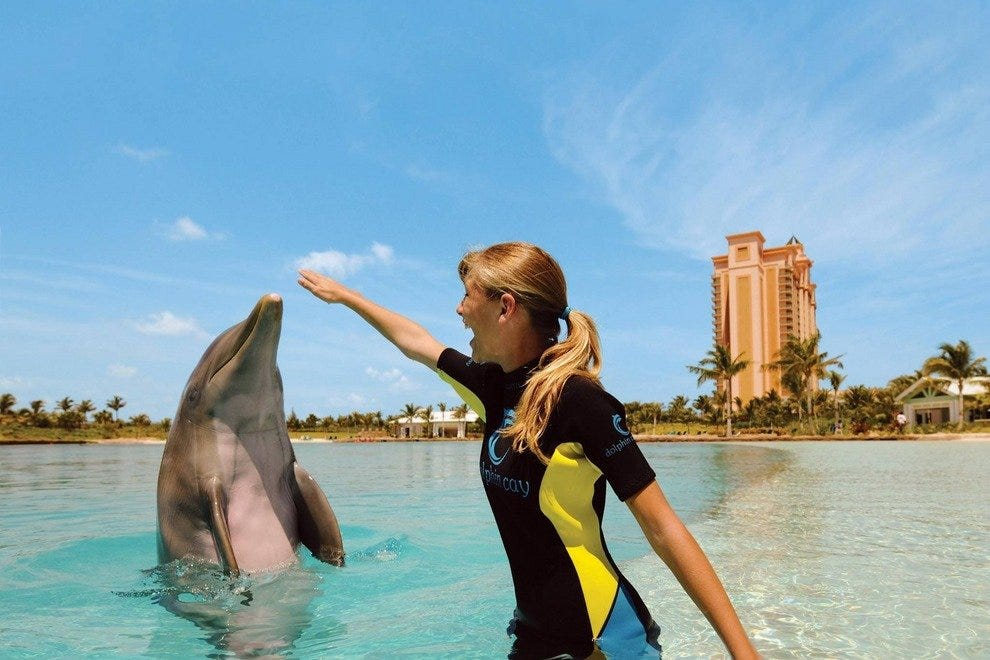 Trainer for a Day at Atlantis