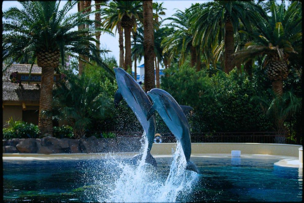 Siegfried Roy 39 S Secret Garden And Dolphin Habitat Las Vegas Attractions Review 10best