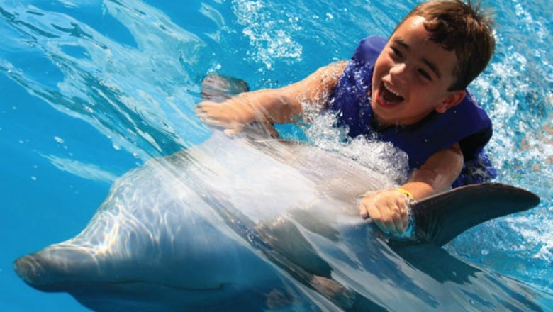 Dolphin swims are one of the area's most popular family-friendly activities.