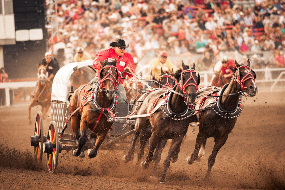 Chuckwagon at the Calgary Stampede
