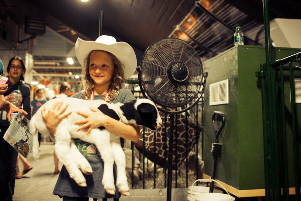 A young participant shows a lamb