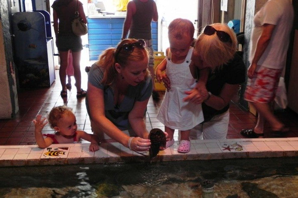 Touch tank at the Key West Aquarium.