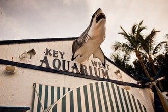 Sea Critters, Sunken Treasure and Sandy Beaches Keep Key West Compelling