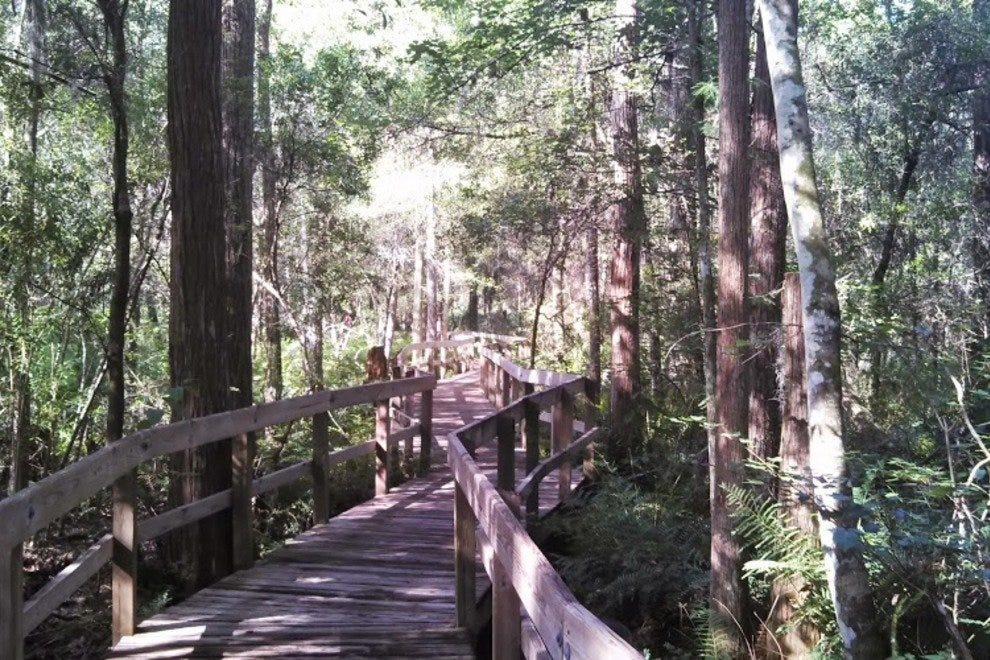 The Lettuce Lake boardwalk lets you wander the hardwood swamp without getting your feet wet