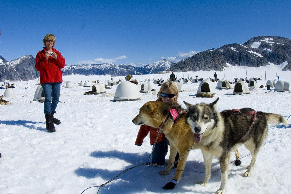 Playing musher with sled dogs is a hilarious Alaskan experience.