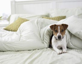 Best Pet Friendly Hotel Winners for 2013 Announced