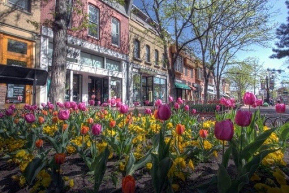 珍珠街上的春天是美丽的