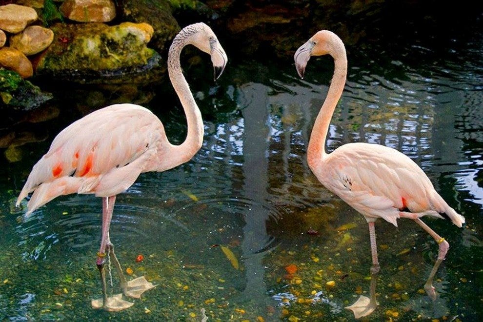 New flamingos at the Key West Butterfly and Nature Conservatory