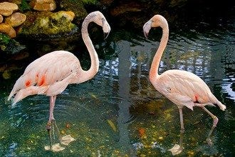 Key West Butterfly and Nature Conservatory Adds Flamingo Duo