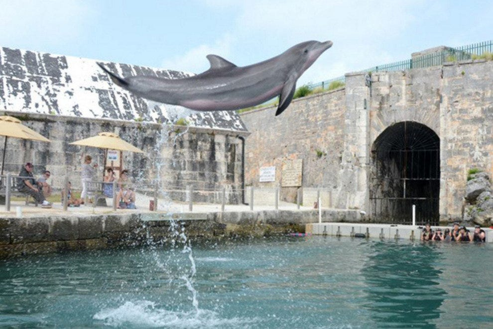 Bailey, a favorite dolphin at Dolphin Quest in Bermuda