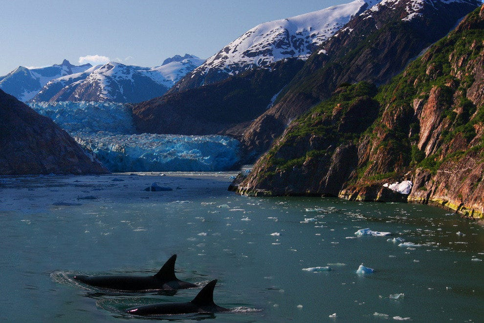 Killer whales spotted in an Alaskan fjord