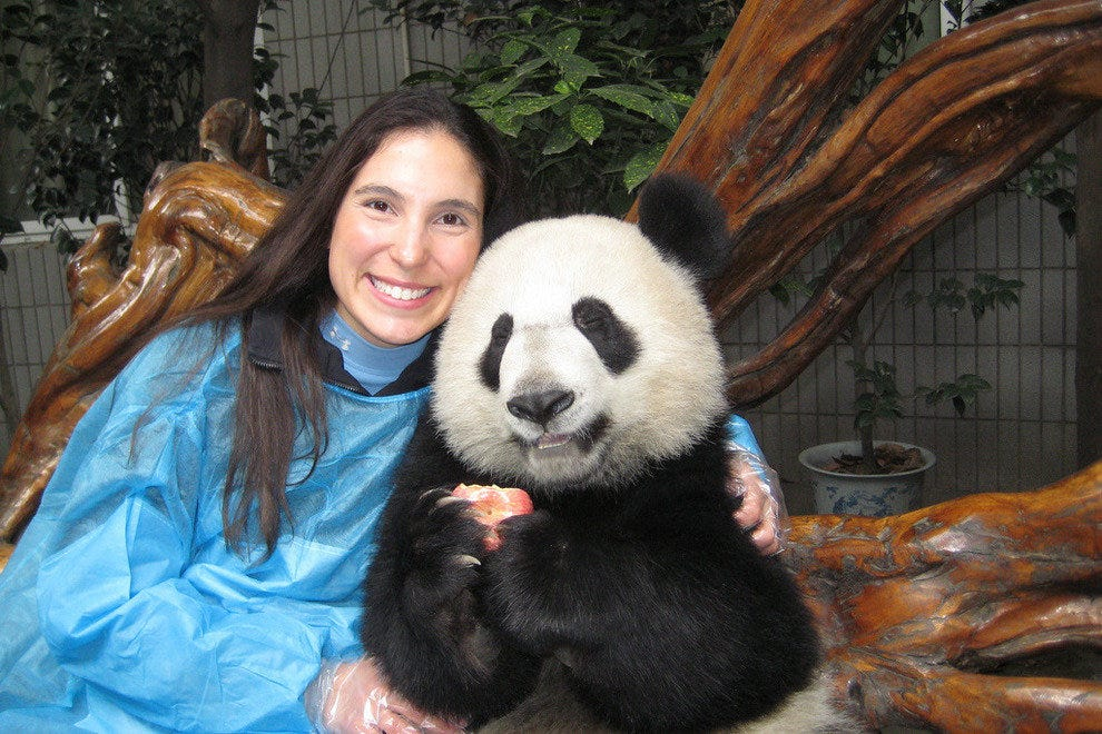 Photo op with a Giant Panda in Chengdu