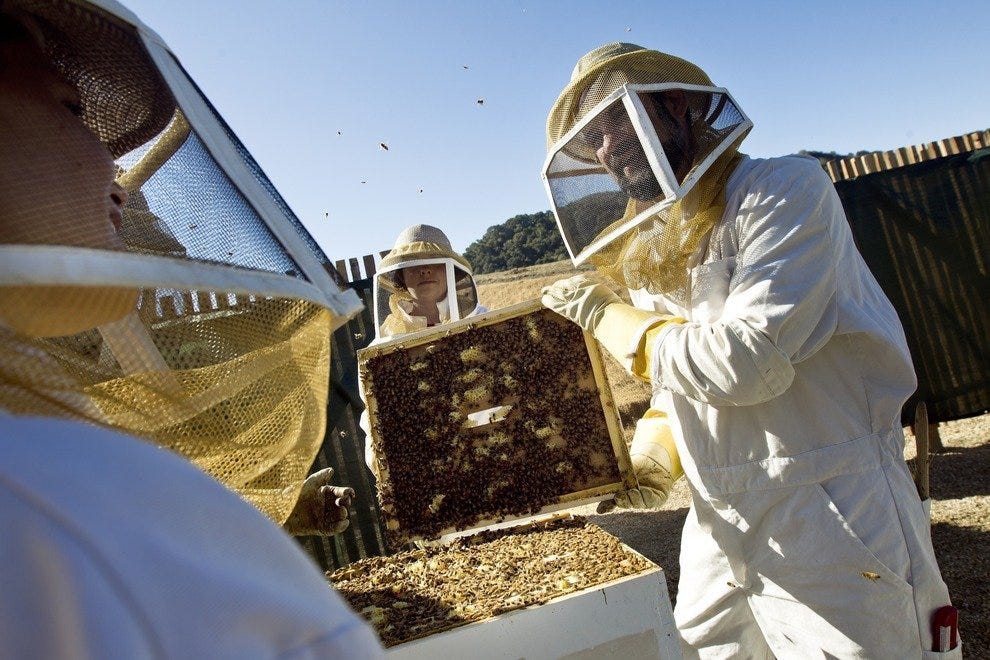Guests tour the hives to learn about the Carmel Valley Ranch bees.