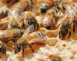 September is National Honey Month