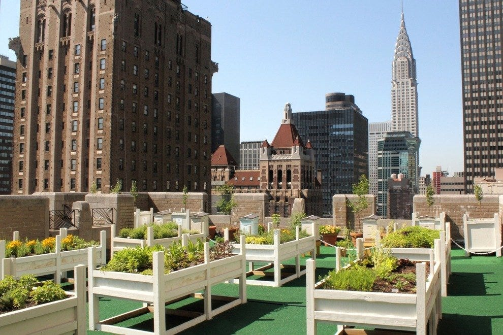 Hives on the roof of the Waldorf Astoria New York