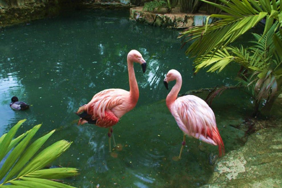 阿达斯特拉花园动物园和保护中心