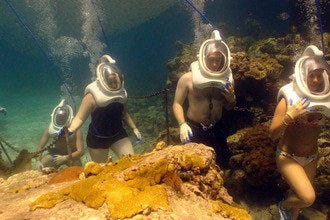 Scuba Diving & Snorkeling in U.S. Virgin Islands