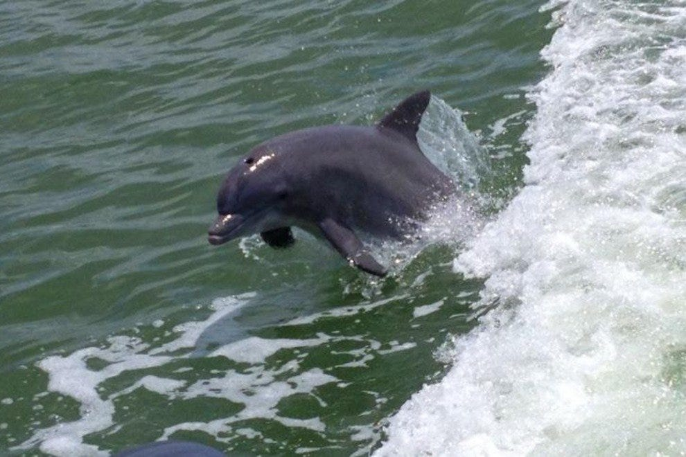 Estero Bay Express Dolphin Tours