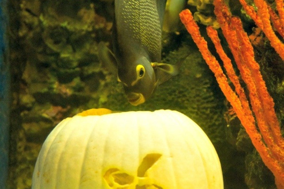 Halloween at the Aquarium