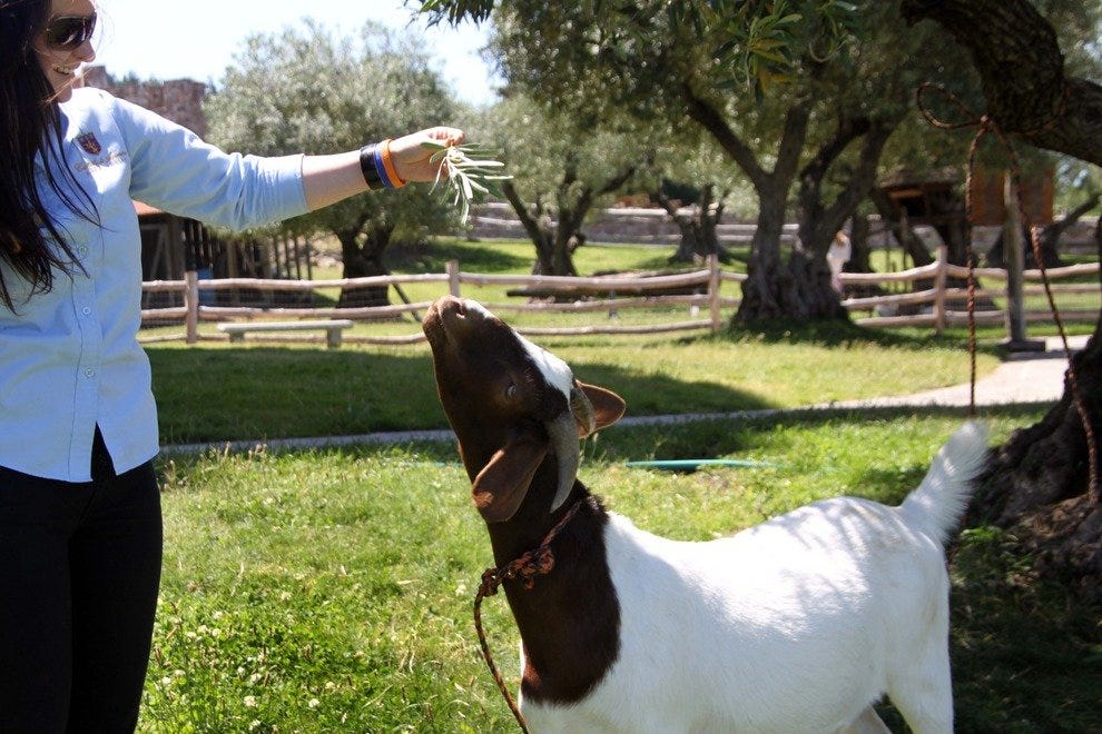Farm Animals Entertain the Kids at the Family-Friendly Winery