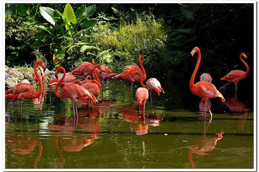 Flamingo gardens fort lauderdale attractions review 10best experts and tourist reviews for Flamingo gardens fort lauderdale