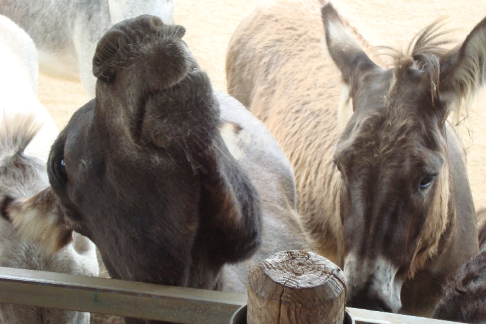 Donkey Sanctuary Aruba: Aruba Attractions Review - 10Best Experts