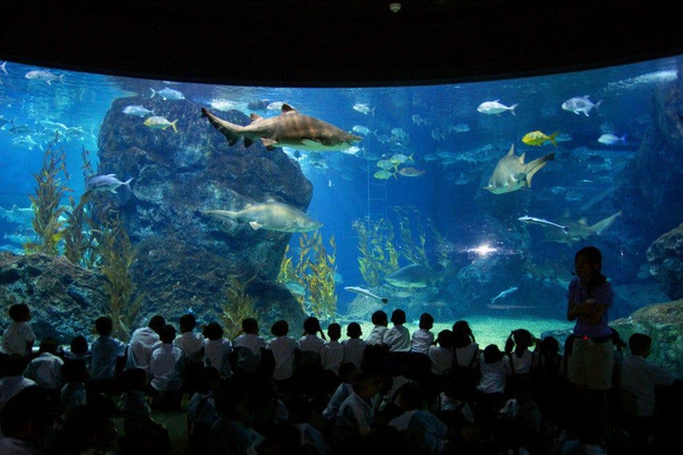海洋生物海洋世界