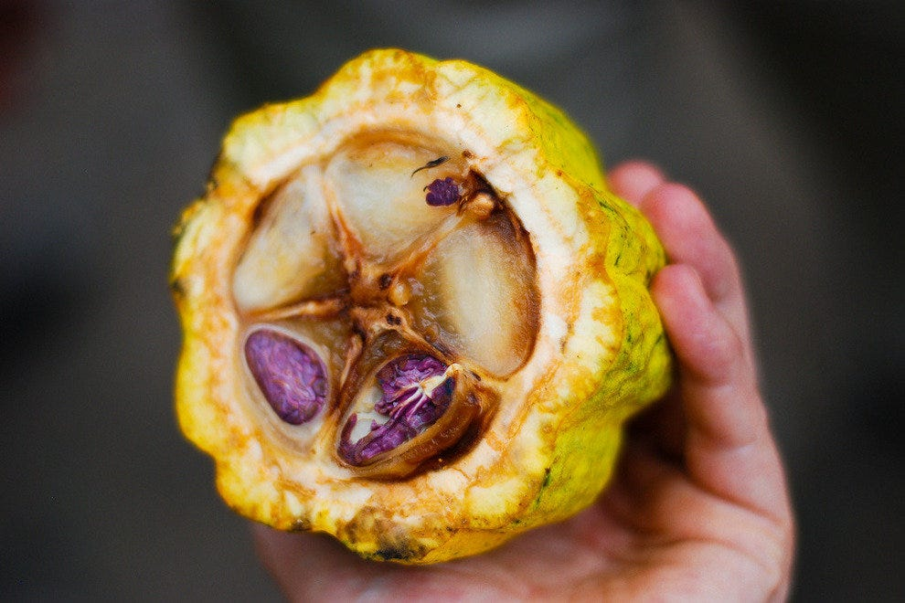 Inside the cacao fruit
