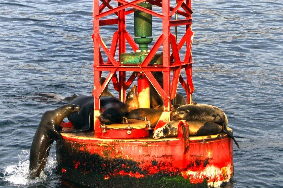 Sea lions, San Diego Bay