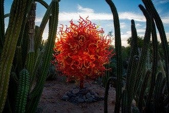 Desert Botanical Garden Hosts Glass Sculpture Exhibit by Dale Chihuly