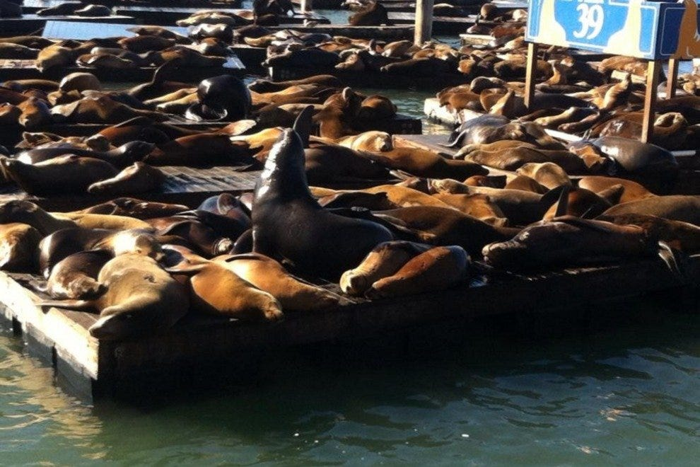 The sea lions reigning over Pier 39