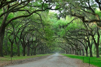 10 Best Places in Savannah to Sightsee for History Buffs and Nature Lovers