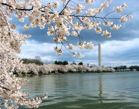 Best Places to See Spring Cherry Blossoms