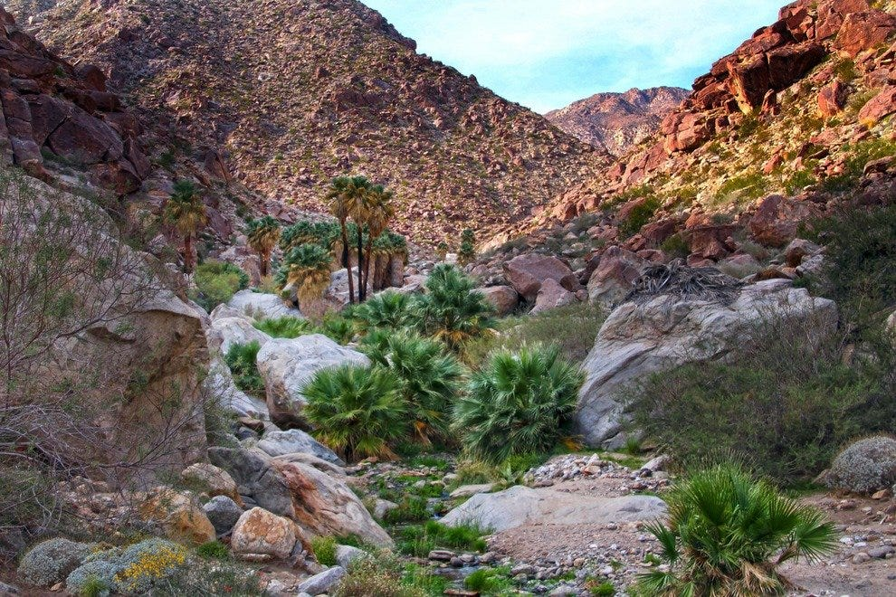 Borrego Palm Canyon: A Trail of Green in the Desert