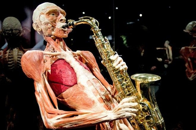'Body Worlds: The Happiness Project' Showcases Human Anatomy in Amsterdam