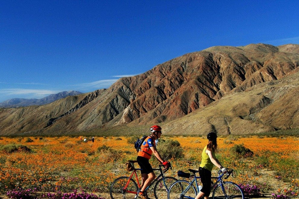 Pedaling Past Petals for the Ultimate Biking Experience