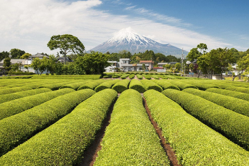 Mt. Fuji Tea Plantations