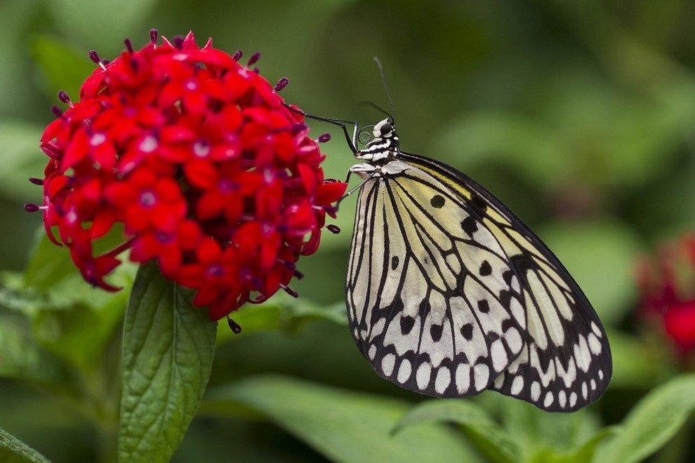 将展出超过10000只蝴蝶。