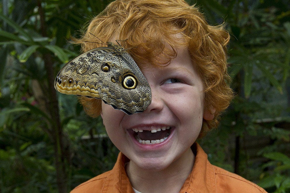 Kids love Butterfly Jungle!