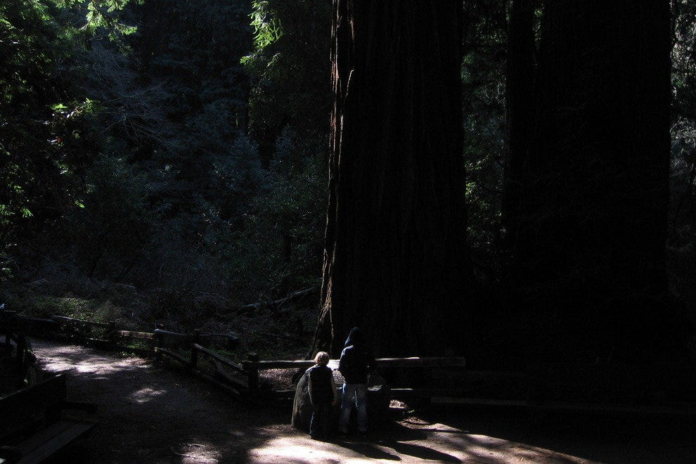 The next generation in the shadows of Muir Woods